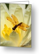 Tropical Gardens Greeting Cards - Amber Dragonfly Dancer Greeting Card by Sabrina L Ryan
