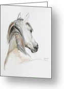 Canvas Drawings Greeting Cards - Ansata El Naseri Greeting Card by Janina  Suuronen