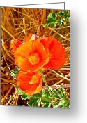 Grand Staircase - Escalante National Monument Greeting Cards - Apricot Globemallow in Vermilion Cliffs National Monument-AZ Greeting Card by Ruth Hager