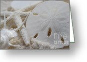 Treasures Greeting Cards - Beach Treasures Greeting Card by Carol McGunagle