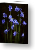 Blue Flowers Greeting Cards - Blue Bells Greeting Card by Svetlana Sewell