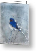 Snow Greeting Cards - Blue Bird  Greeting Card by Fran J Scott