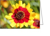 Tickseed Greeting Cards - Coreopsis or Golden Tickseed Greeting Card by J McCombie