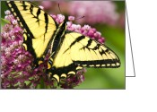 Swallow Tail Butterfly Greeting Cards - Eastern Tiger Swallowtail Butterfly Greeting Card by Christina Rollo