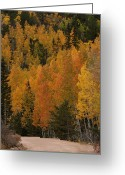 Fall Colors Greeting Cards - Fall Colors Greeting Card by Ernie Echols
