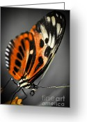 Tropic Greeting Cards - Large tiger butterfly Greeting Card by Elena Elisseeva