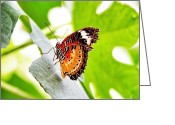Ornamental Greeting Cards - Leopard Lacewing butterfly Greeting Card by Jane Rix