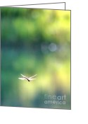 Carol Groenen Greeting Cards - Morning Sunshine on Dragonfly Greeting Card by Carol Groenen