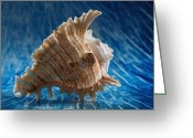 Naturalistic Greeting Cards - Ocean Breeze Greeting Card by Tom Druin