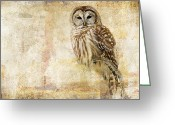 Michel (mike) Soucy Greeting Cards - Strix Varia Greeting Card by Michel Soucy