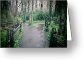 Diannah Lynch Greeting Cards - The Path Greeting Card by Diannah Lynch