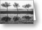 Gaspar Avila Greeting Cards - Three trees Greeting Card by Gaspar Avila