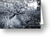 Live Art Greeting Cards - Through the Trees Greeting Card by John Rizzuto