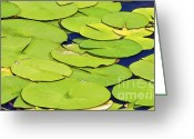 Lilly Pads Photo Greeting Cards - Water Lilly Greeting Card by David Letts