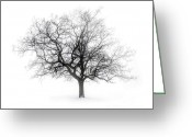 Leafless Greeting Cards - Winter tree in fog Greeting Card by Elena Elisseeva