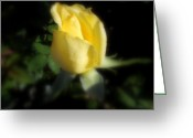 Diannah Lynch Greeting Cards - Yellow Rose Greeting Card by Diannah Lynch