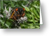 Cicada Greeting Cards - 17 Year Cicada Greeting Card by Lara Ellis