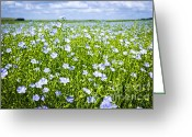 Farm Greeting Cards - Blooming flax field Greeting Card by Elena Elisseeva