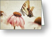 Summertime Drink Greeting Cards - Butterfly Dreams Greeting Card by Aimee Eisaman