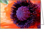 Photographic Art Greeting Cards - Poppy Greeting Card by Rona Black