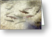 Game Greeting Cards - Rainbow trout Greeting Card by Les Cunliffe