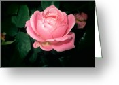 Diannah Lynch Greeting Cards - Rose Of My Heart Greeting Card by Diannah Lynch