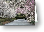 Gardeners Greeting Cards - The Walk Greeting Card by JC Findley