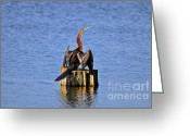Birdwatcher Greeting Cards - Wet Wings Greeting Card by Al Powell Photography USA