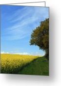English Countryside Print Greeting Cards - Yellow Green and Blue - ref 761 Greeting Card by Colin Hogan