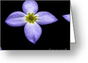 Color Purple Greeting Cards - Bluets Greeting Card by Thomas R Fletcher