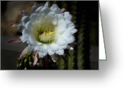 Night Blooming Greeting Cards - Echinopsis candicans Greeting Card by Saija  Lehtonen