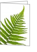 Shape Photo Greeting Cards - Fern leaf Greeting Card by Elena Elisseeva