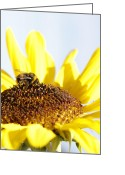 Pollinate Greeting Cards - Bee on flower Greeting Card by Les Cunliffe