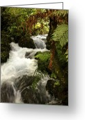 Rain Forest Greeting Cards - Waterfall  Greeting Card by Les Cunliffe