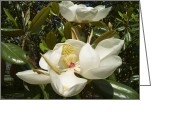 Magnolia Grandiflora Greeting Cards - A Pair of Southern Magnolia Blossoms 2 Greeting Card by MM Anderson