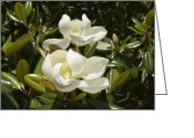 Magnolia Grandiflora Greeting Cards - A Pair of Southern Magnolia Blossoms Greeting Card by MM Anderson