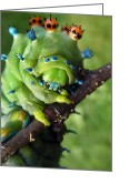 Bizarre Digital Art Greeting Cards - Alien Nature Cecropia Caterpillar Greeting Card by Christina Rollo