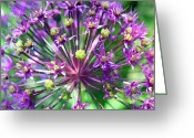 Purple Flowers Greeting Cards - Allium series - Close Up Greeting Card by Moon Stumpp