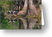 Black Bird Greeting Cards - American Anhinga or Snake-Bird Greeting Card by Christine Till