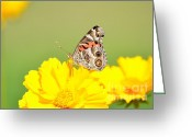 Kathy Gibbons Greeting Cards - American Lady On A Sunny Day Greeting Card by Kathy Gibbons