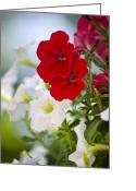 Flower Art Greeting Cards - Antique Petunia Greeting Card by Christina Rollo