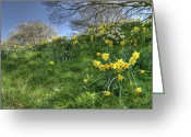 David Birchall Greeting Cards - April Morning Greeting Card by David Birchall