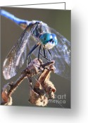 Carol Groenen Greeting Cards - Aqua Dragonfly Greeting Card by Carol Groenen