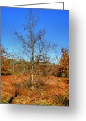 Autumn Photographs Greeting Cards - As Time Goes On Greeting Card by Ester  Rogers