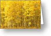 Landscape Photograpy Greeting Cards - Aspen Grove Greeting Card by Regina Rodgers