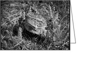 Horned Lizard Greeting Cards - Attack of the Lizard Greeting Card by Christena  Stephens