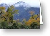 Colorado Mountain Greeting Cards Greeting Cards - Autumn Splendor Greeting Card by Theresa Baker