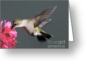 Second Greeting Cards - Azalea And The Hummingbird Greeting Card by Lara Ellis