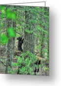 Black Bear Climbing Tree Greeting Cards - Baby black bear cub climbing tree Greeting Card by Dan Friend