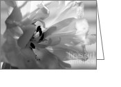 Backlit Greeting Cards - Backlit Black and White Tulip Greeting Card by Sharon  Talson